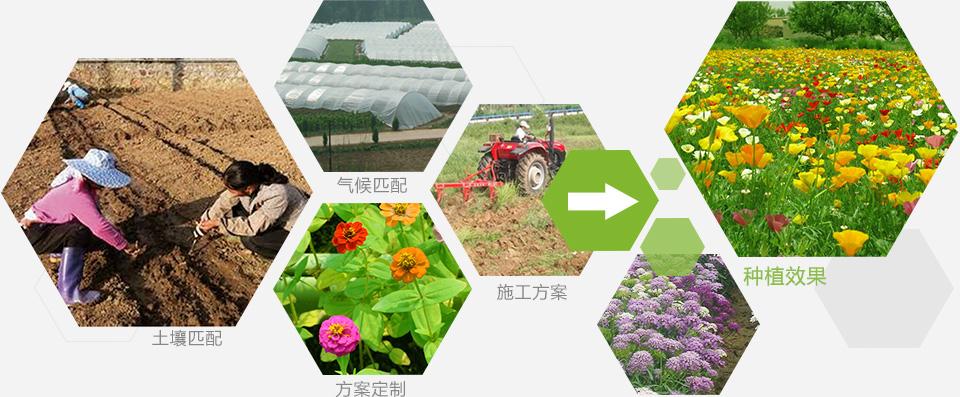 红豆草种子供应发布怎么卖
