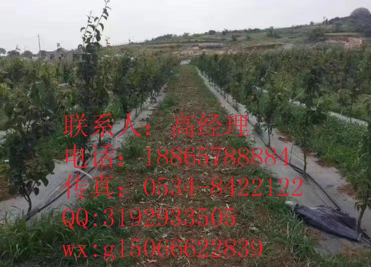 双辽市龙山区园林防草布实力厂家