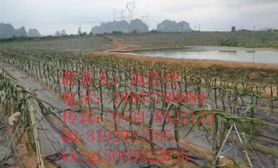 洛江區園林防草布-歡迎咨詢