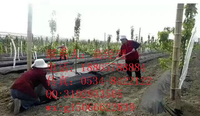 赤城县种植防草布一平米多少钱