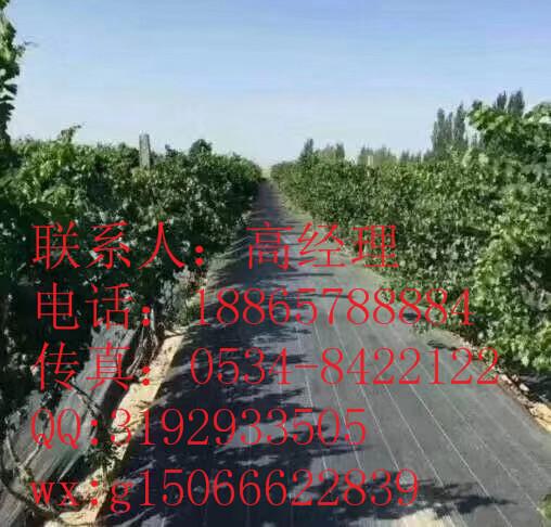 广州市果木防草布-发货快