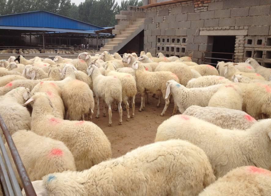 饲料添加剂肉牛育肥饲料牛饲料多少钱一吨