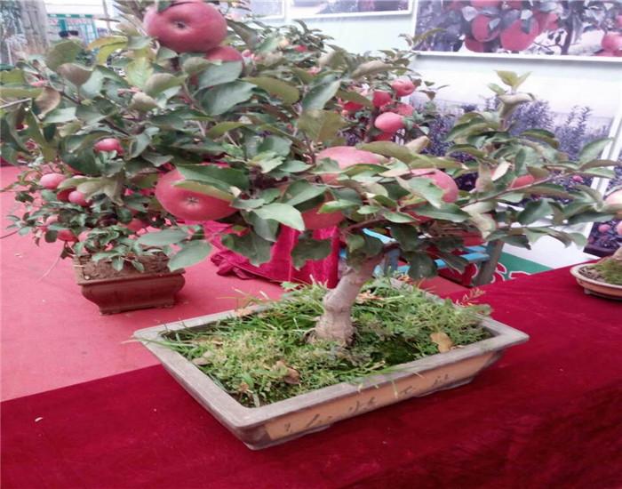 四川�_州大棚草莓苗主要�a�^在什么�r格出售苗木