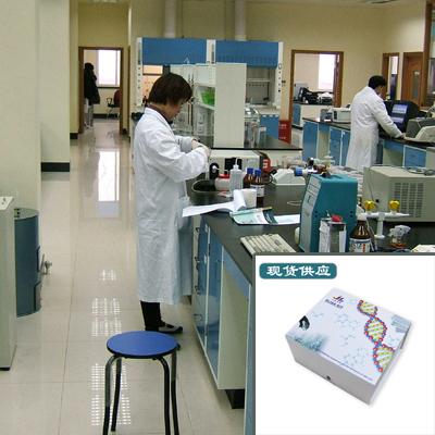 待测人凋亡相关半胱氨酸肽酶4Casp4试剂盒免费