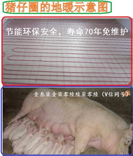 养殖取暖板片母猪生小猪舍取暖垫地暖施工猪栏舍保暖订做