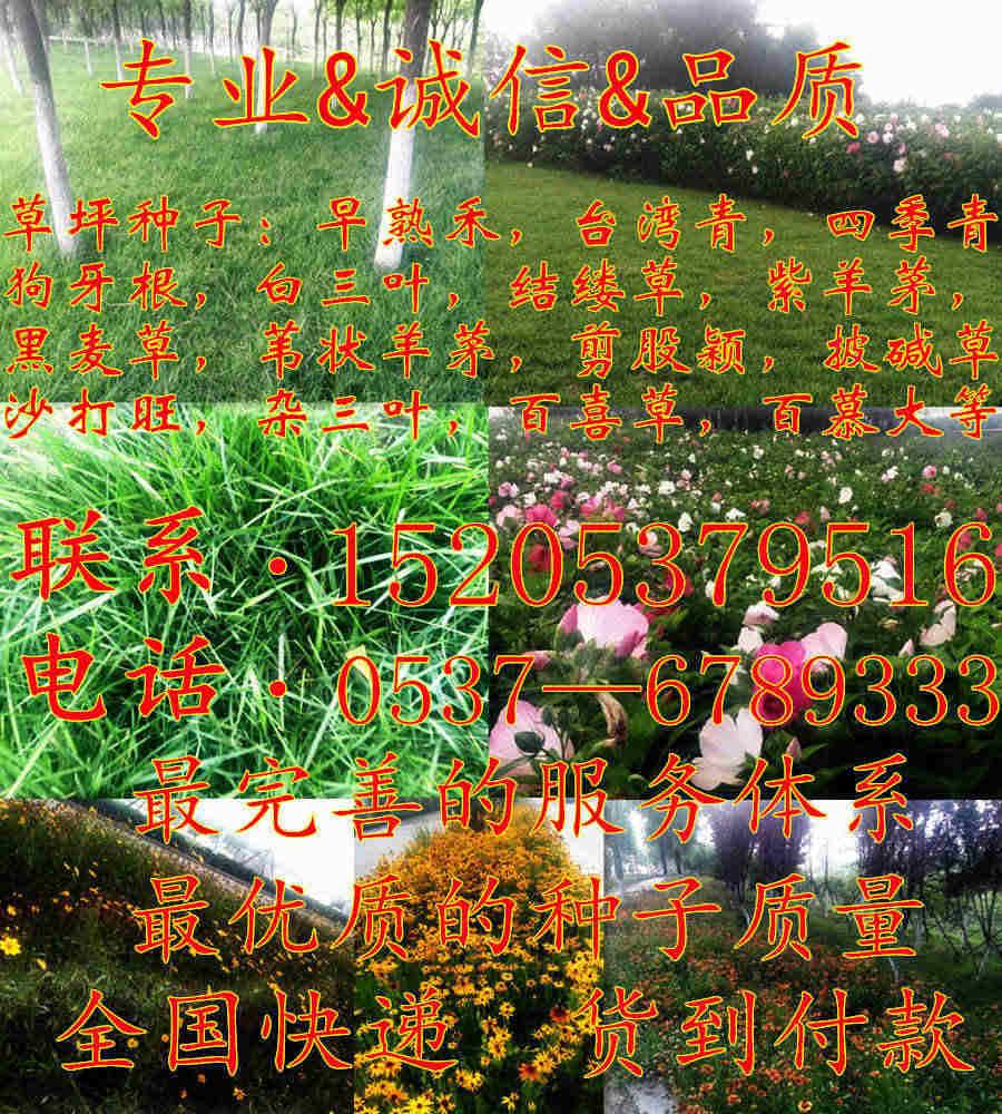 山东省临沂市草坪种子怎样进行播种