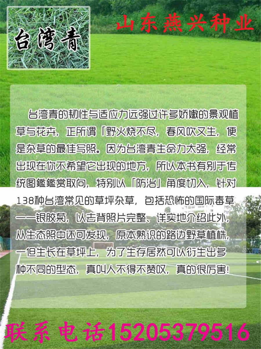 堆龙德庆县出售一年生黑麦草种子多钱一公斤