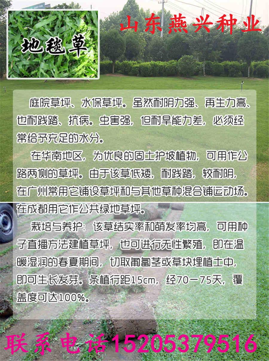 盐津县出售黑麦草种子多钱一公斤