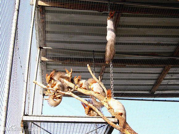 松鼠多少钱什么地方?#26032;?#20146;人的松鼠江苏养殖松鼠