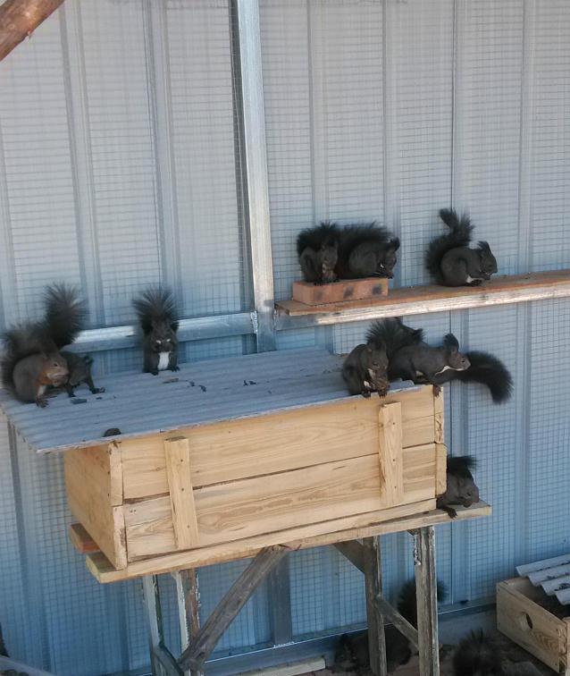 松鼠多少�X哪里有�u松鼠的�V�|松鼠�B殖