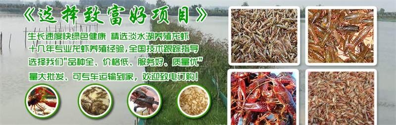 桐乡市小龙虾苗种1斤多少钱养殖技术