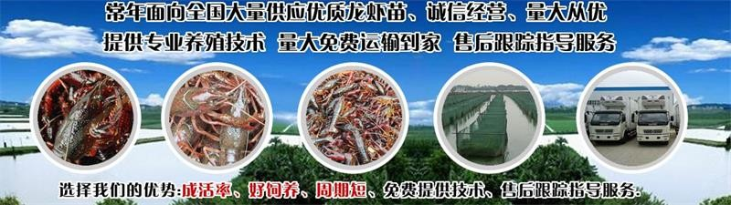 浏阳市小龙虾苗种供应价钱养殖技术