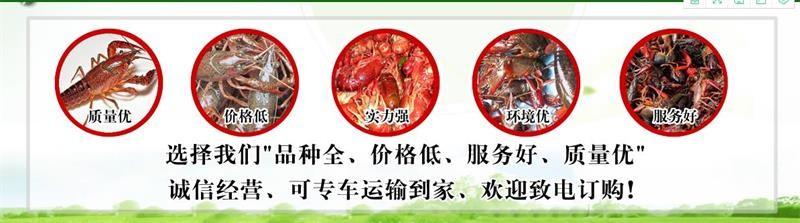 古田小龙虾苗种供应价钱大量批发小龙虾苗