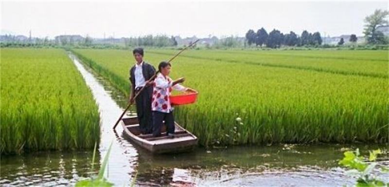 汝州小龙虾苗养殖基地小龙虾苗一亩投入多少