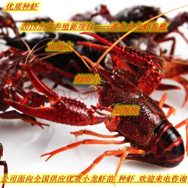 长治武乡县小龙虾养殖基地在哪小龙虾苗批发商家