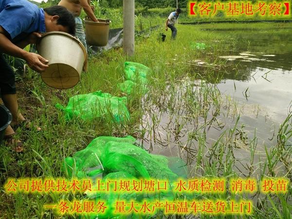 信阳平桥哪里有小龙虾养殖基地一龙虾苗价格发布