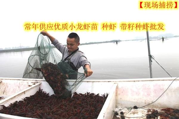 长治武乡县小龙虾养殖场小龙虾市场行情