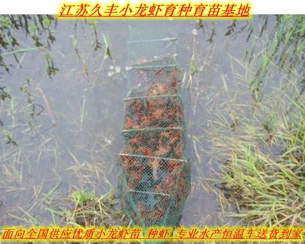 黔东南丹寨县哪里有小龙虾快3网基地一龙虾苗价格发布