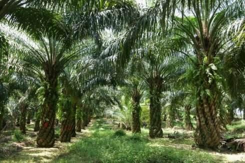 SSDHO 0109 CRUDE PALM OIL印度尼西��棕�霸�油