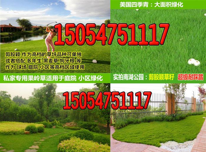 孝昌县南方草坪种子什么好技术