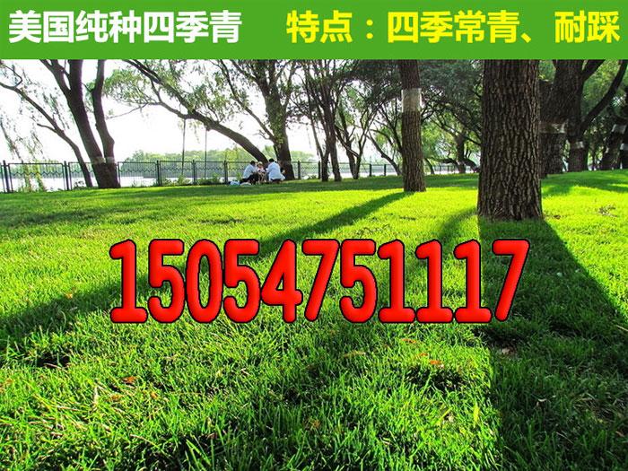 安陆杭州绿化草坪种子卖买基地哪有卖