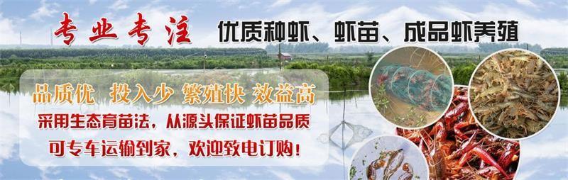 丹江口小龙虾幼苗龙虾种虾出售