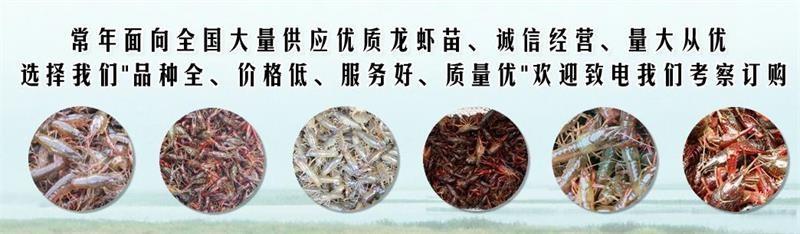 慈溪小龙虾种苗出售