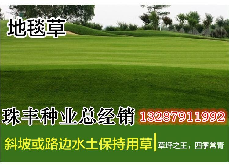 北京地�^�i吃什么牧草好找哪家