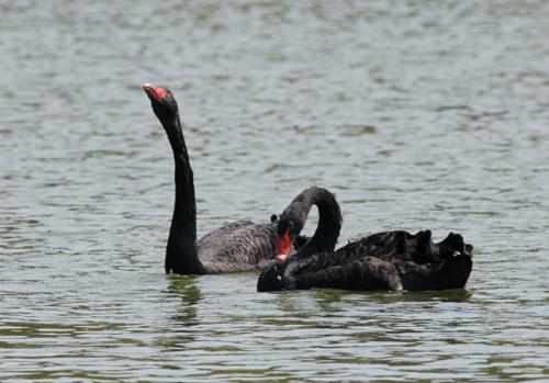南漳县赖的鸵鸟图片
