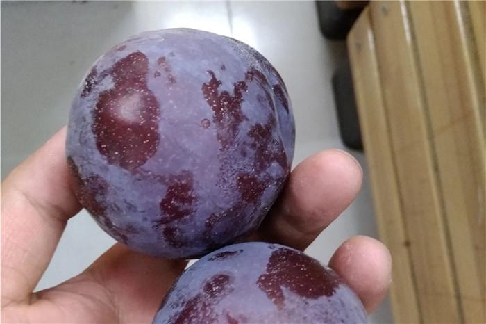河池市太空草莓苗优惠格