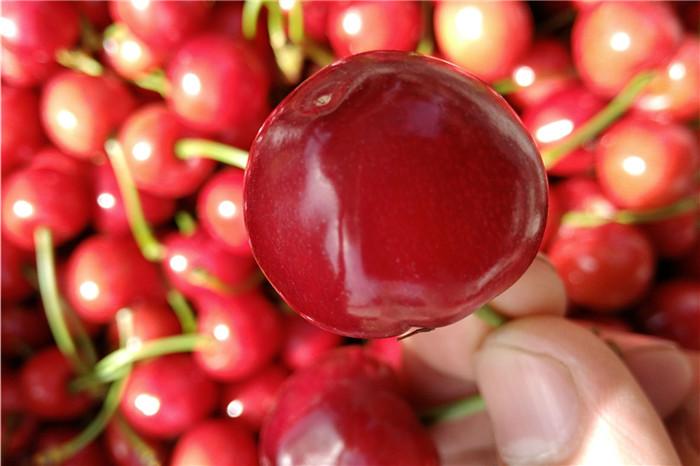 銅仁市太空2008草莓苗批發價格多少錢