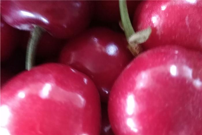 汉中市草莓苗基地价格