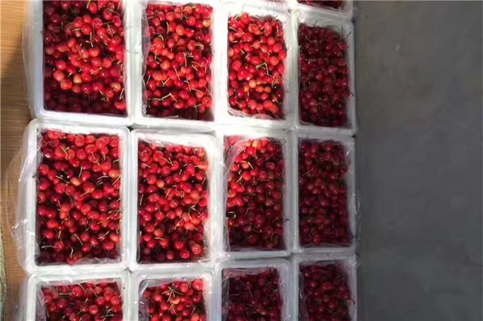 无锡市甜查理草莓苗基地
