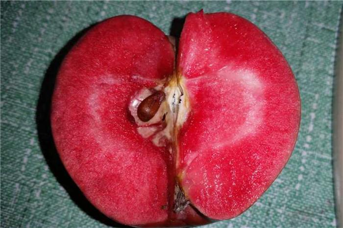 长治市5公分鲁丽苹果树苗嫁接种苗
