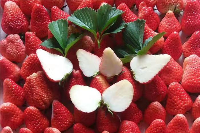 柳州市品种红蛇果树苗2018品种