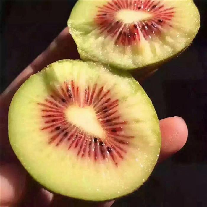 克拉玛依市小白草莓苗批发价格是多少
