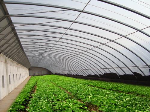 供应湖北地区日光温室蔬菜大棚、山东豪达瑞科厂家直销