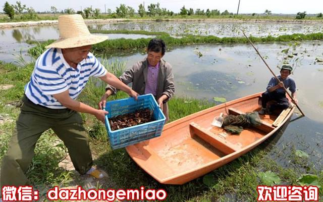 鹰潭小龙虾苗今日报价-小龙虾苗繁殖