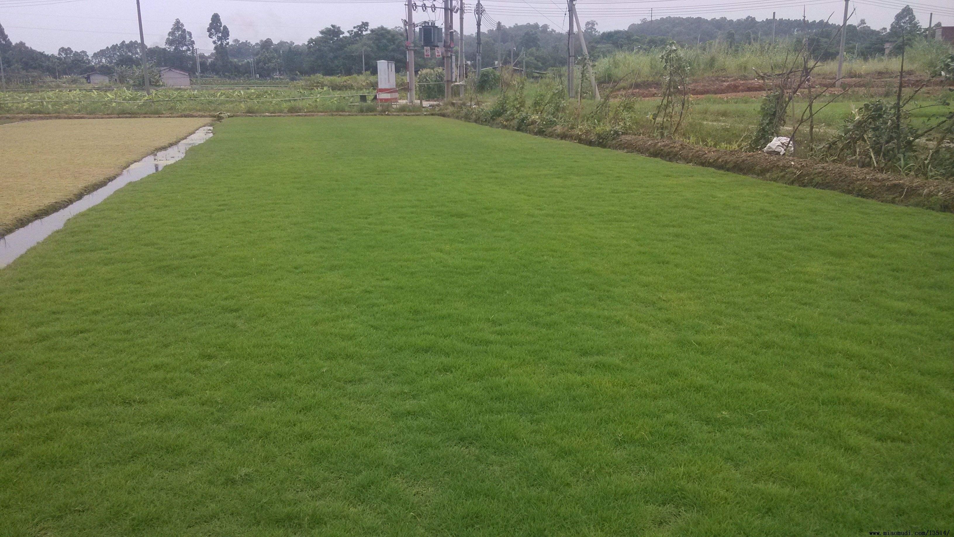 绿化冬季播的草籽价格多少