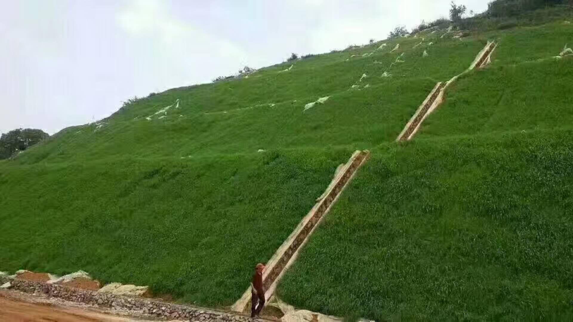 绿化北方绿化草种子货到付款