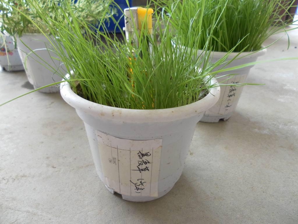 绿化草坪种子种植什么花发芽率高
