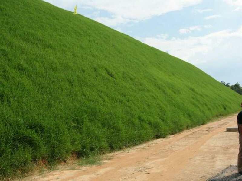 绿化私家庭院草种子选择批发价格