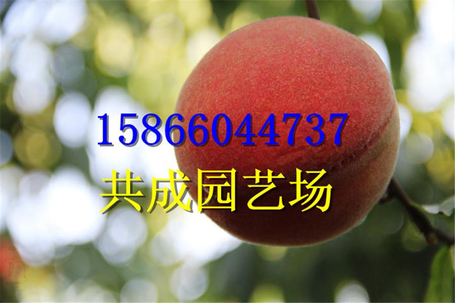 河北廊坊苹果树苗哪里卖