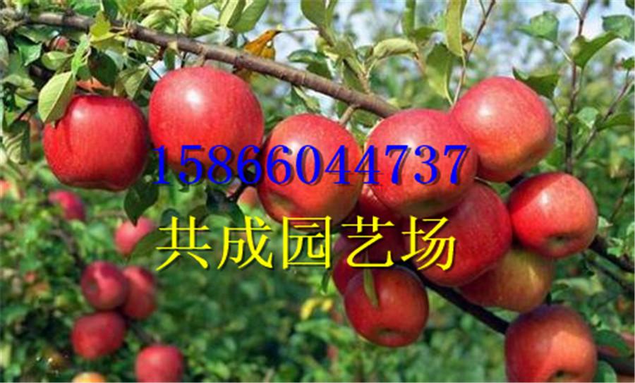这里销售桃树实生苗陕西渭南桃树实生苗怎样栽植