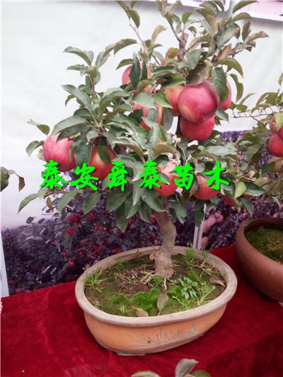 资阳2公分草莓苗怎么买