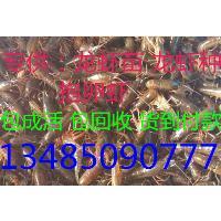 扬州龙虾苗批发扬州龙虾苗多少钱一斤
