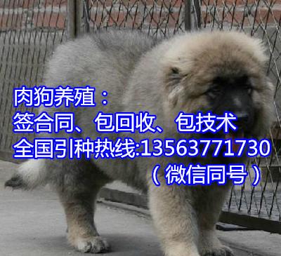 河南郑州肉食狗养殖场赚钱吗明大肉狗养殖总场