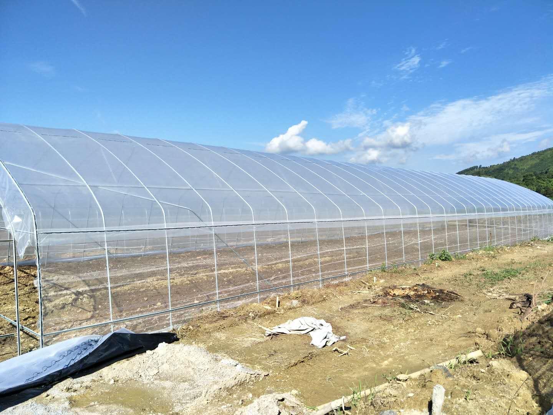 薄膜大棚、简易塑料大棚、单栋大棚、揭阳蔬菜合作社基地大棚建设