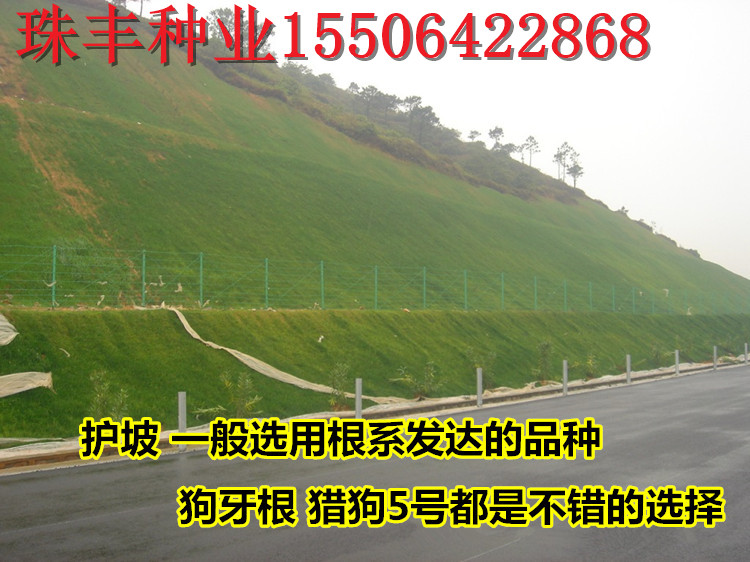 北京-饲用甜高粱种子-价位_云商网招商代理信息