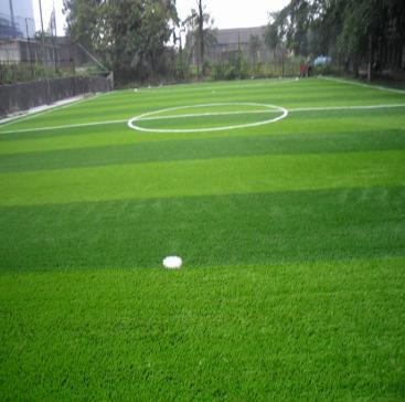 供兰州棒球场草坪和甘肃绿化草坪厂家